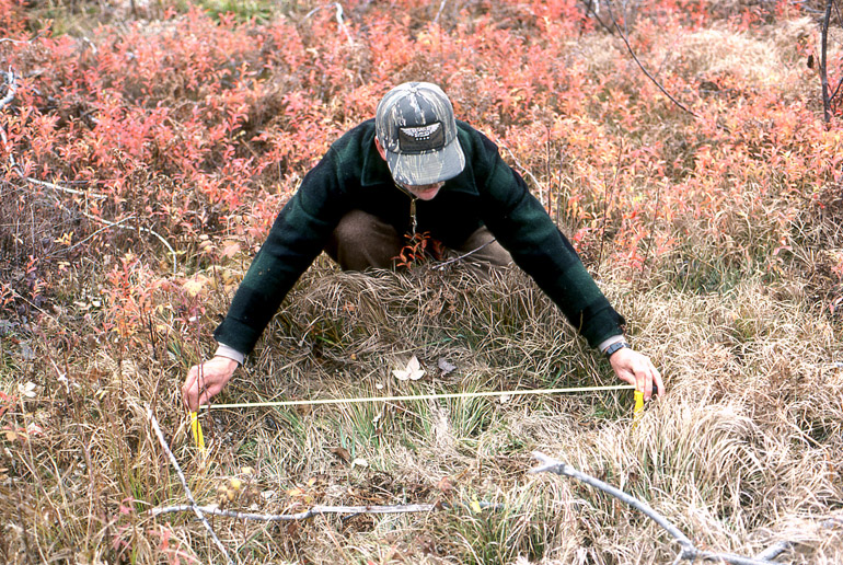 A hunter is leaning over a grassy bed, made by a whitetail, and measuring its length with a steel measuring tape.