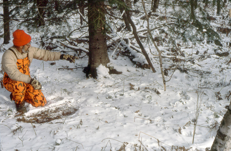 Doc is kneeling in snow by a larger deer's bed while pointing to a smaller deer's bed.