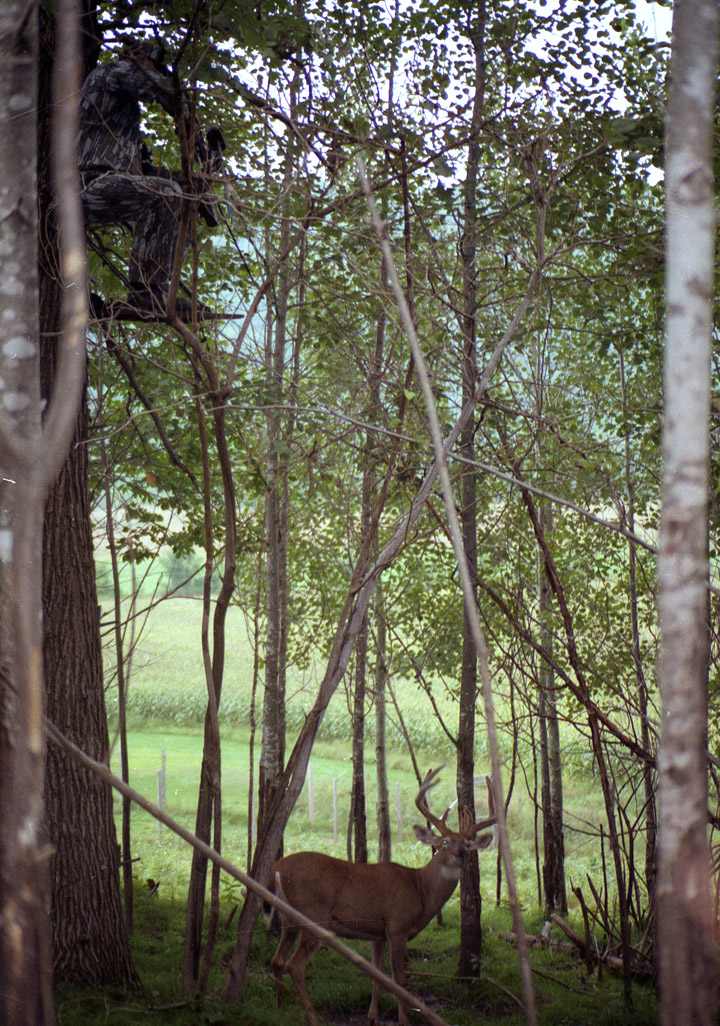 Doc, in a tree stand, aims his bow at a trophy-class buck almost directly below him.